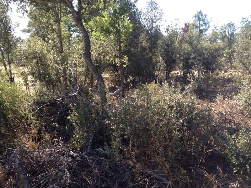 Nuevo campo en Segovia Img_3512