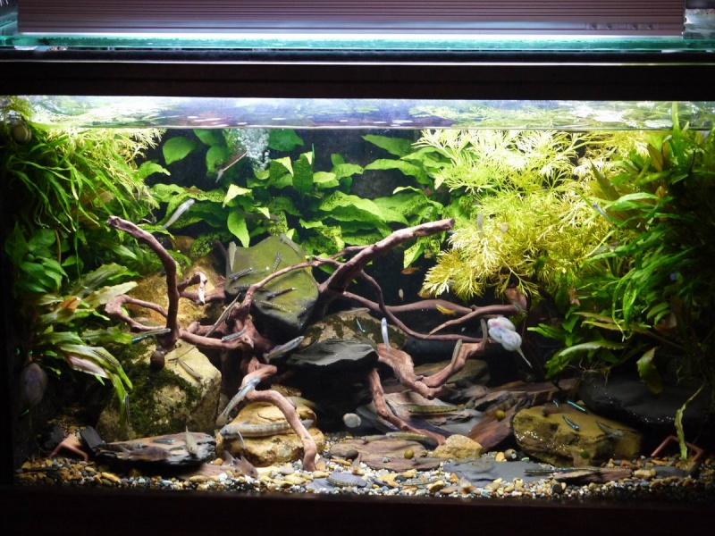 my streams tank 110 liters Eaaap110