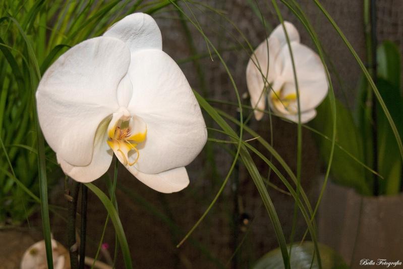 Une orchidée Img_0613