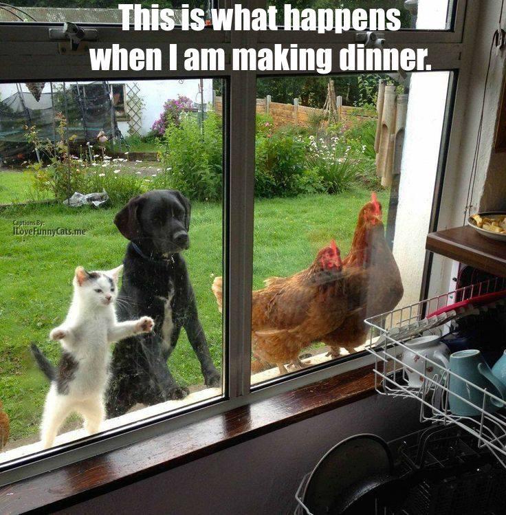 Les meilleures photos humour/tendresse animaux!  14703710