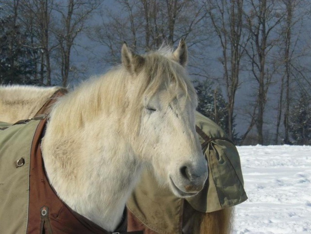 """Concours """"Paysage d'hiver avec animal"""" 69199_10"""