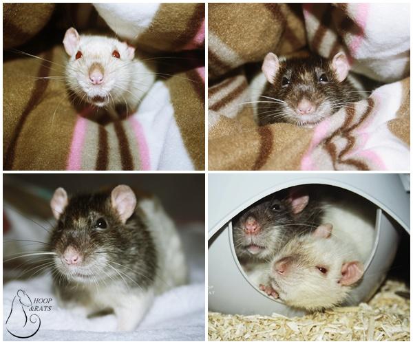Les Hoop & Rats - Page 4 Uhk10