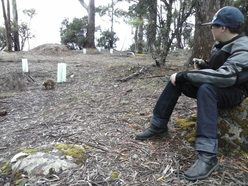 Tasmania 2014 - Page 3 22510