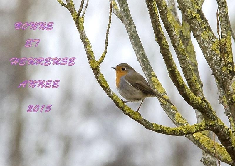 Images en fêtes - Page 2 Sans_t15