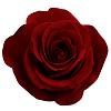 Concours Pack: spécial Saint Valentin ! - Page 8 Rosero10
