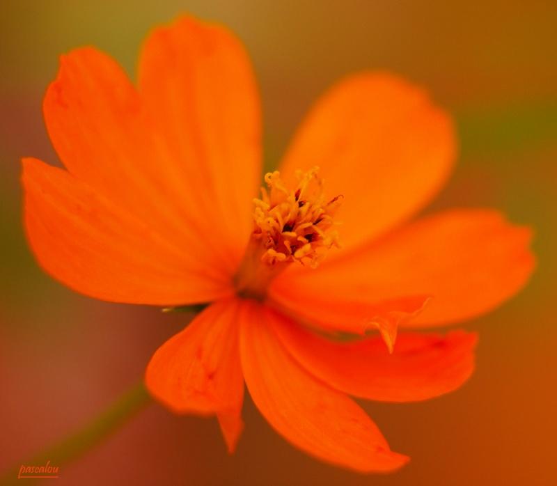 orange ou rouge _6234710