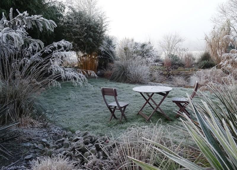 Mon jardin sous le givre Dsc04124