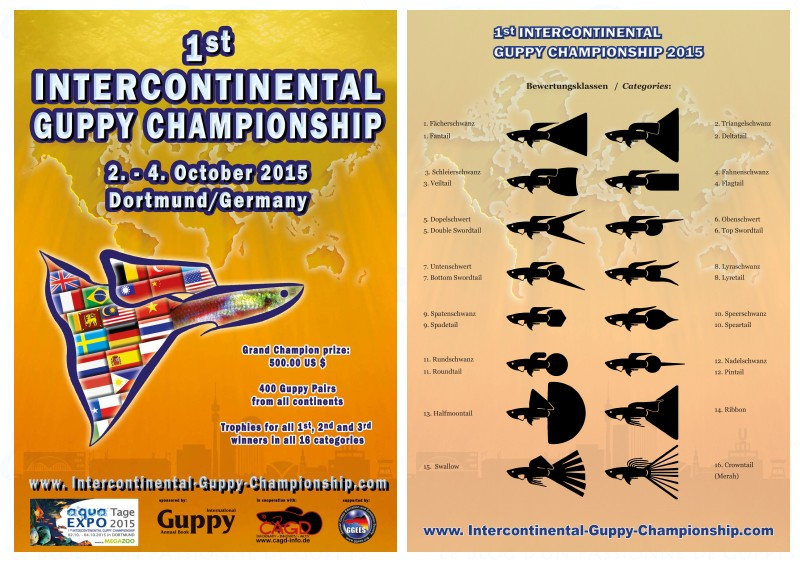 1er championnat intercontinental de guppy Interc10