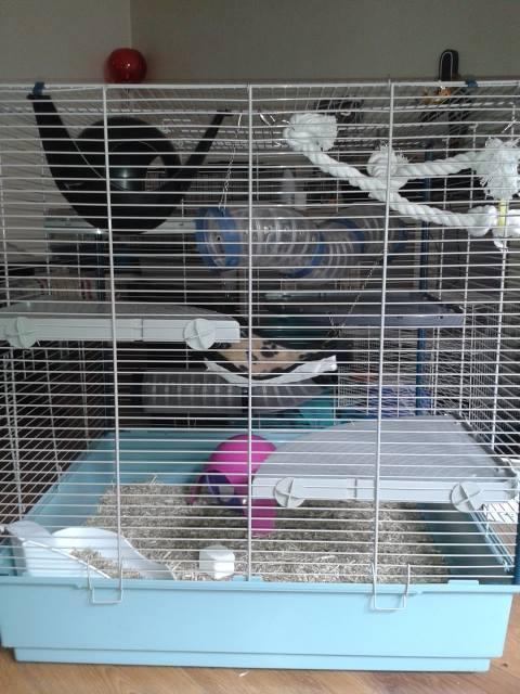 Photos de vos cages - Page 3 Facebo16