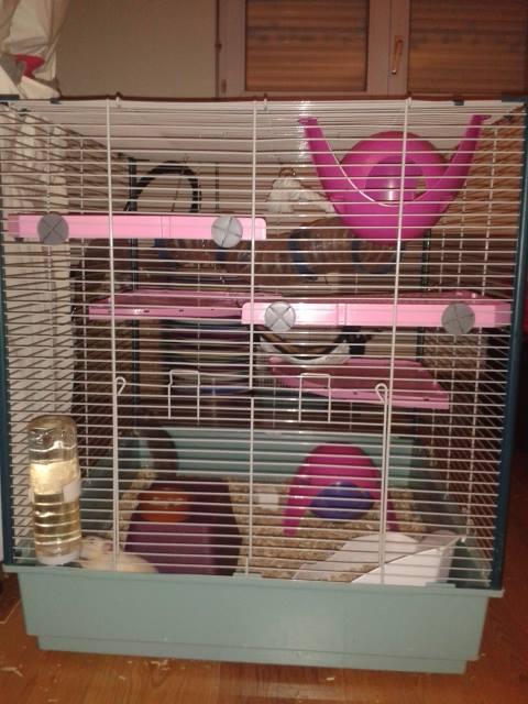 Photos de vos cages - Page 3 Facebo20