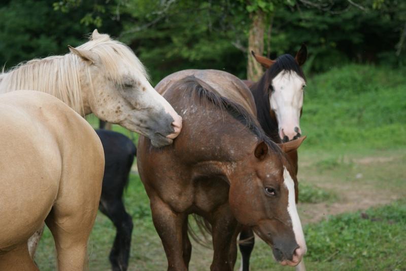CONCOURS PHOTOS : La St Valentin équine Dsc04210
