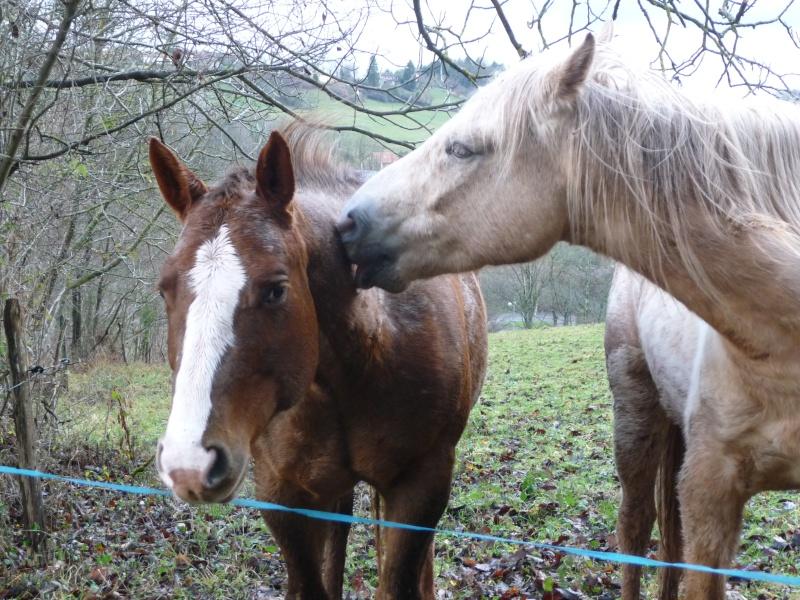 CONCOURS PHOTOS : La St Valentin équine P1140310
