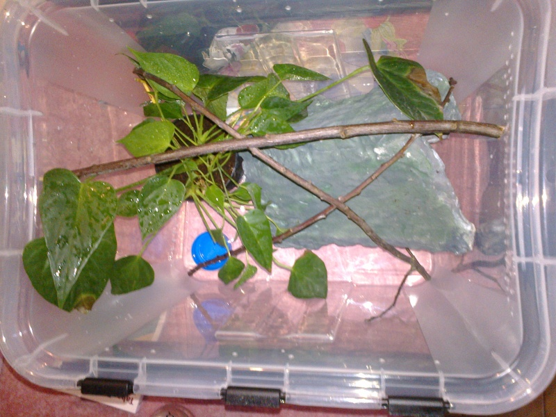 Projet terrarium gecko à crête - Page 2 20150111