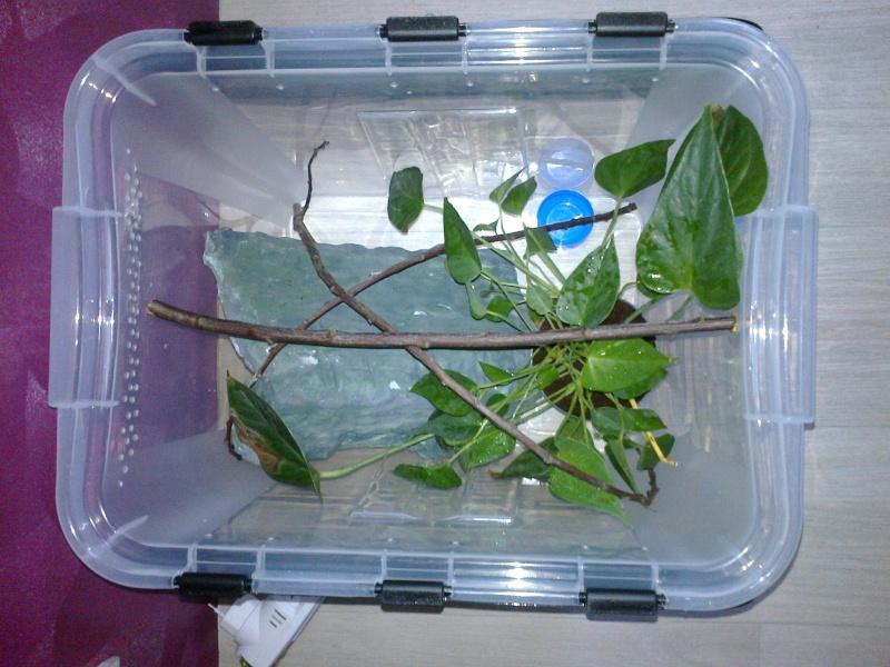 Projet terrarium gecko à crête - Page 2 20150112