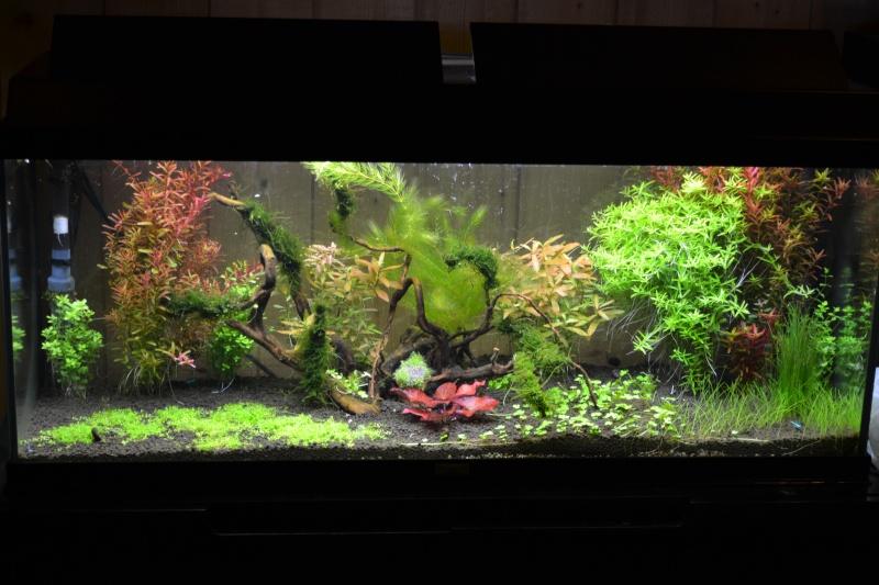"""Evolution """"Green nature tank"""" V3 Unname10"""