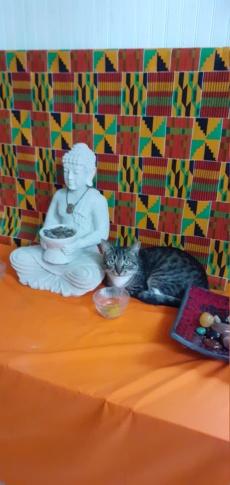 Quelques phrases du Bouddha 20210212