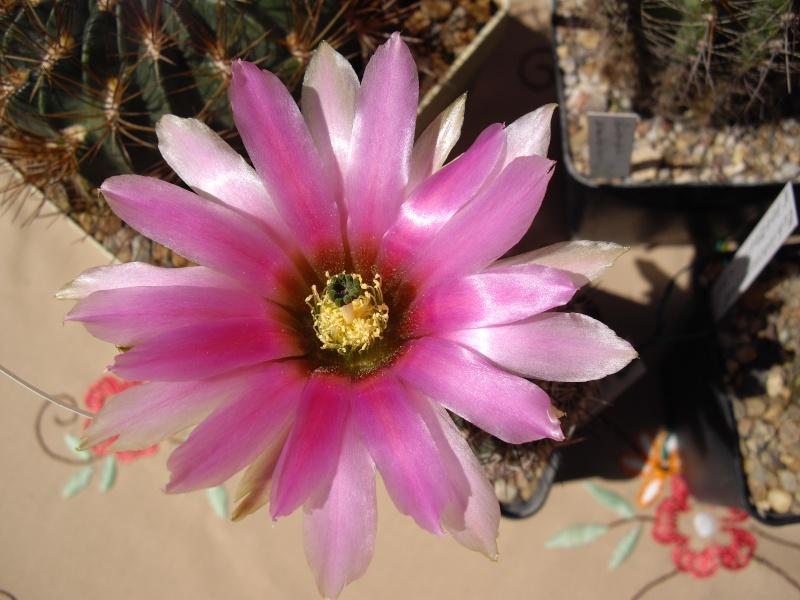 Blüten aus 2014 116