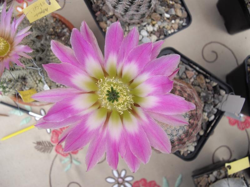 Blüten aus 2014 118