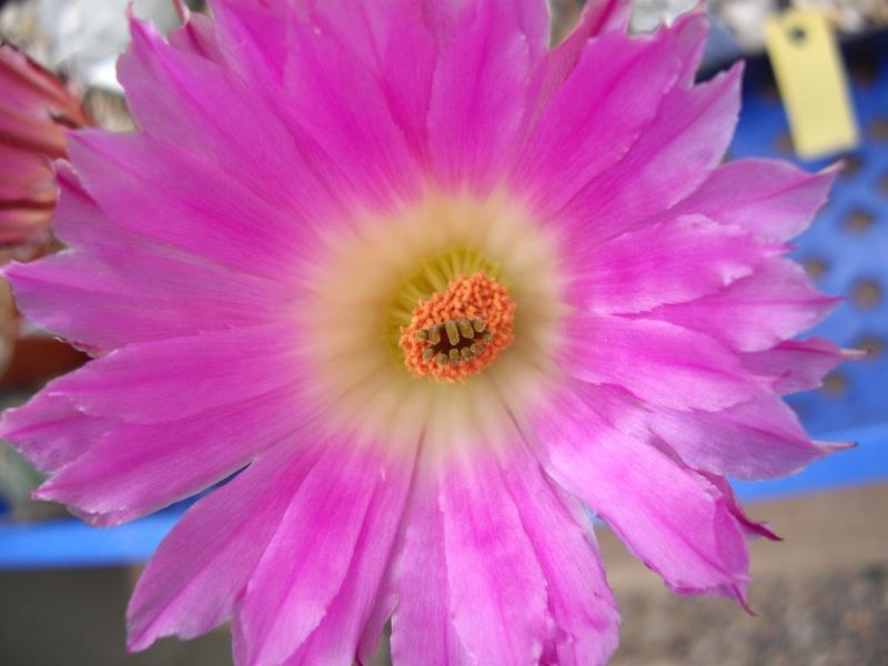 Blüten aus 2014 218