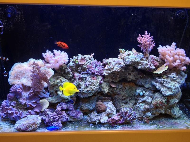 Reef de Gégé84 - Page 2 10801810