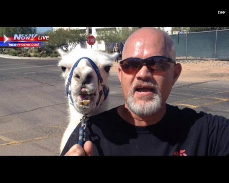 Jodi Arias--Trial for the murder of Travis Alexander #29 - Page 5 Llama_10