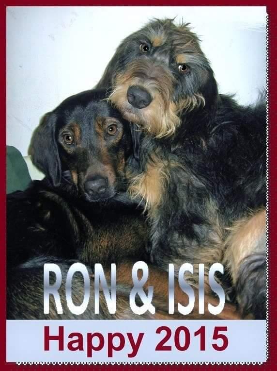 Nouvelles de Isis (griffon) Fb_img40