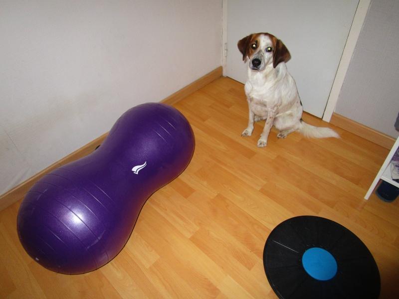 activité - La proprioception = prise de conscience de son corps dans l'espace chez le chien - Page 4 Img_0312
