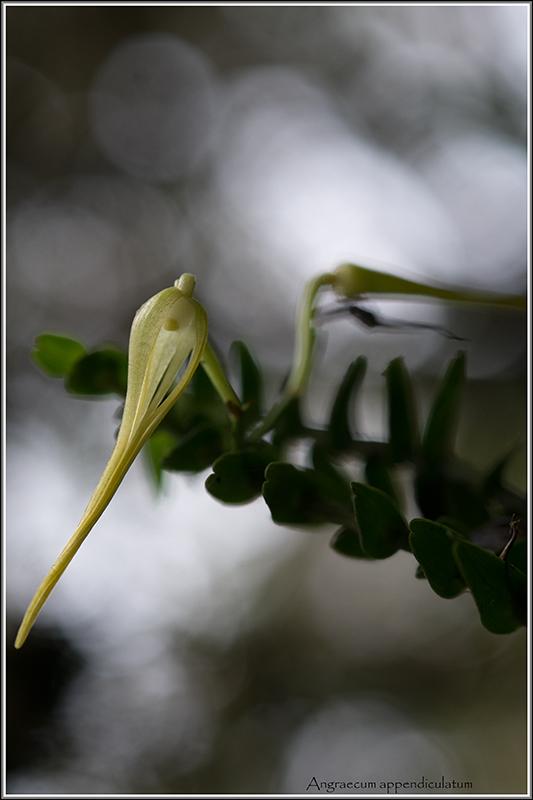 deux endémiques de saison . Append13
