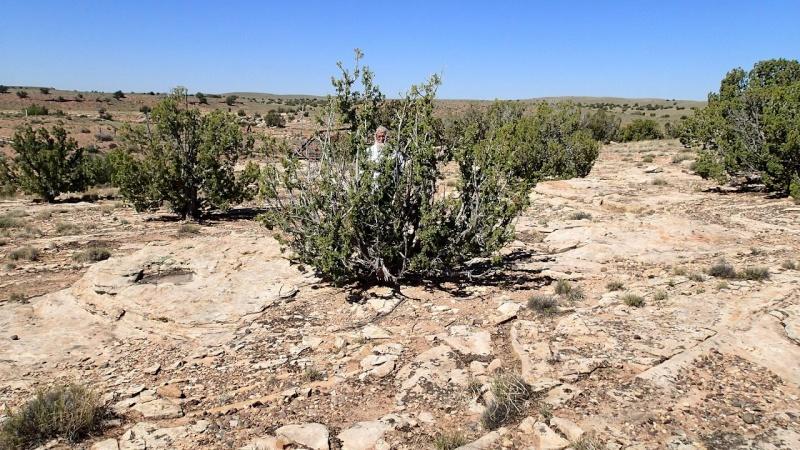 Escobaria missouriensis var. marstonii K-p51015