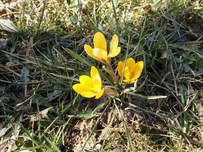 Schwertliliengewächse: Iris, Tigrida, Ixia, Sparaxis, Crocus, Freesia, Montbretie u.v.m. - Seite 4 P3093511