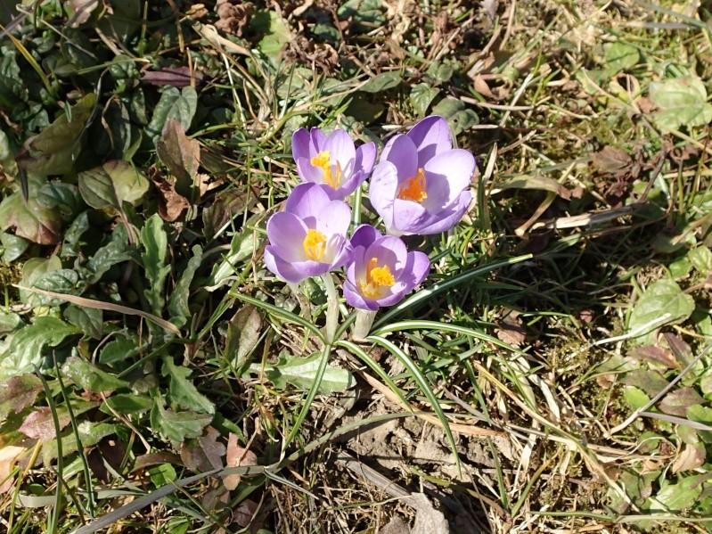 Schwertliliengewächse: Iris, Tigrida, Ixia, Sparaxis, Crocus, Freesia, Montbretie u.v.m. - Seite 4 P3093512