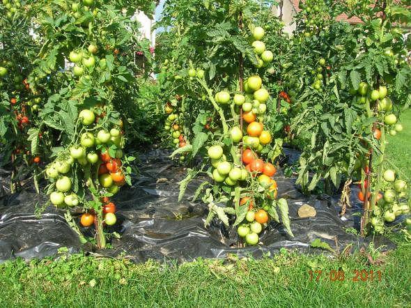 Сад огород Getima14