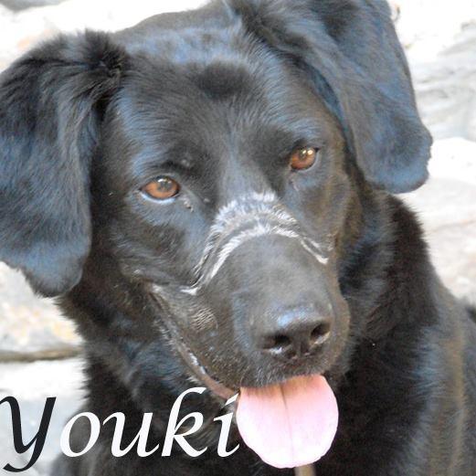 URGENT!!! Youki X labrador 10 ans - patte avant morte -  cherche fa ou adoptant / 69 Association croc blanc  Youki_13