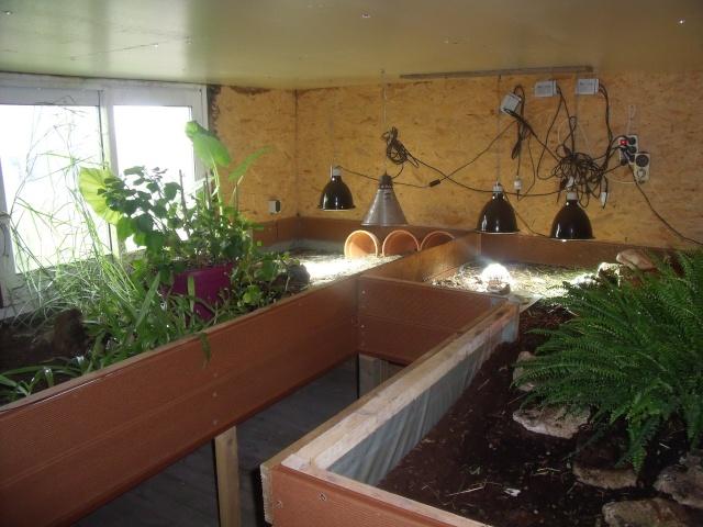 regroupement ici de vos terrariums et serres Terra_12