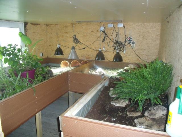 regroupement ici de vos terrariums et serres Terra_13