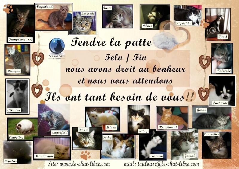 Nos positifs !! 45 amours de chats à adopter - Page 3 Affich12
