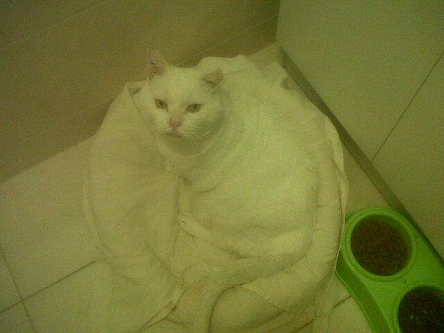 LULLY papi blanc Img02212