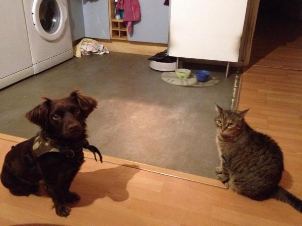 Les chats à adopter qui s'entendent avec les chiens Thalia10