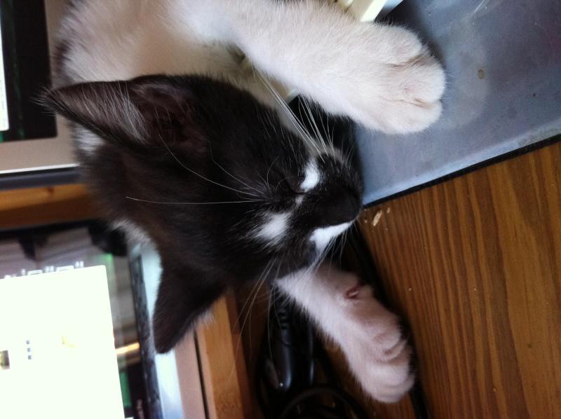 Tiana adoptée Photo111