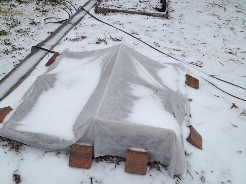 The Winter Journey and greenhouse plastic  - Page 9 Img_0912