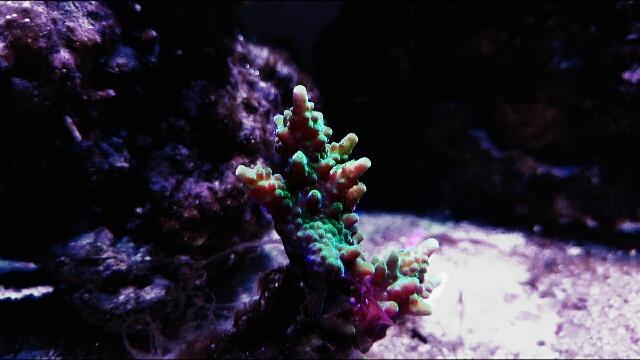 juwel rio eau de mer  Colort12