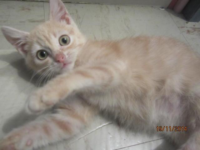 Hamour - Petit coeur trouvé la queue inerte et incapable d'uriner seul est marrainé :) Img_0512
