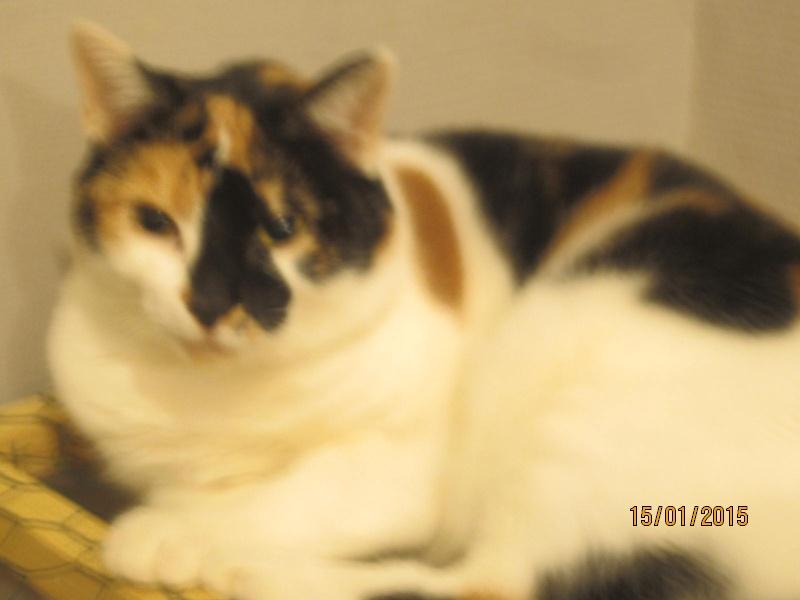 Lola - minette sauvage tricolore est marrainée par Emeline D. Merci ! Img_1121