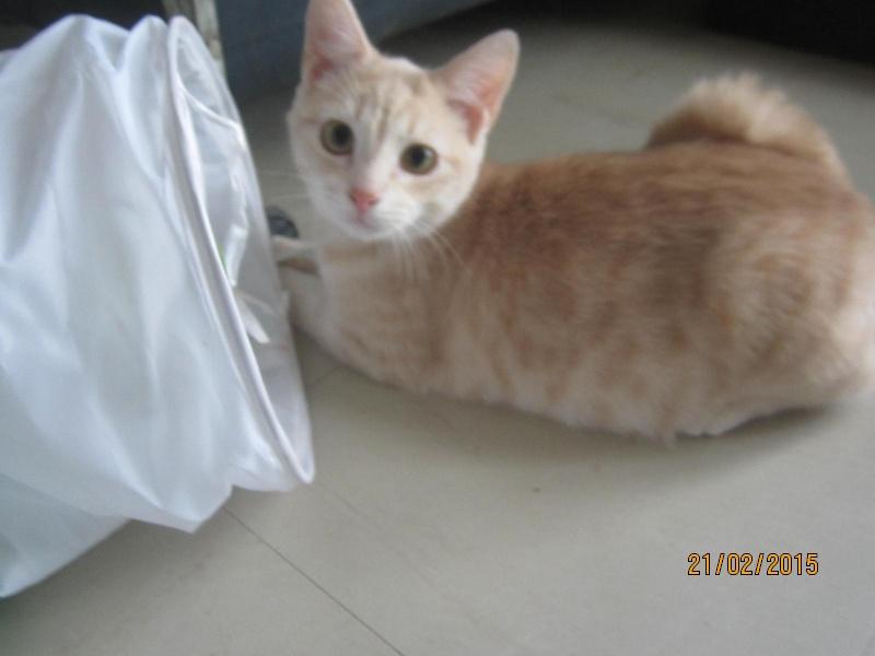 Hamour - Petit coeur trouvé la queue inerte et incapable d'uriner seul est marrainé :) Img_1512