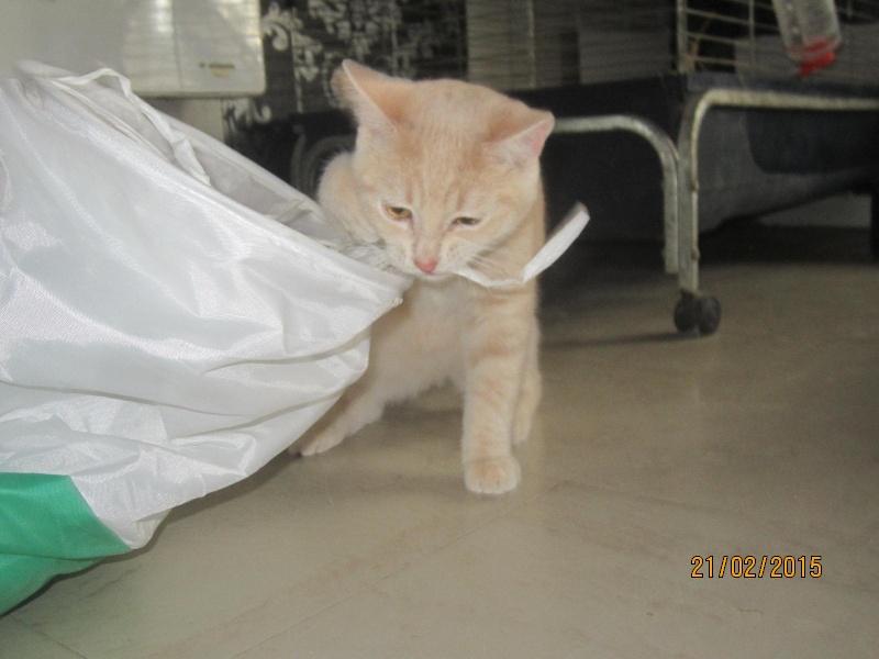 Hamour - Petit coeur trouvé la queue inerte et incapable d'uriner seul est marrainé :) Img_1514