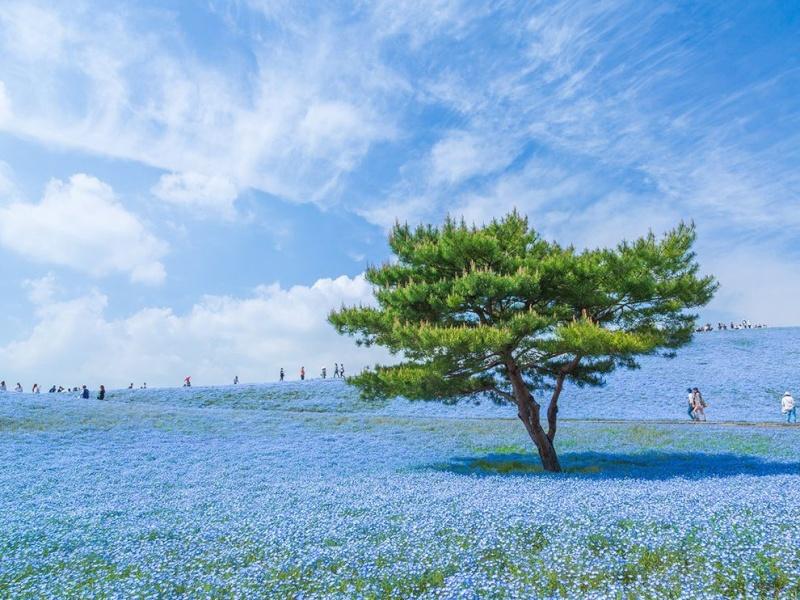 Un peu de spiritualité Flower10