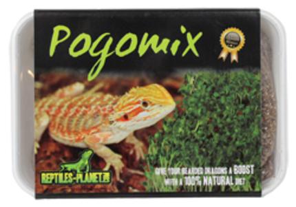 Graine pour Pogona  Pogomi11