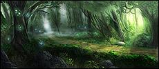 Forêt du Calme