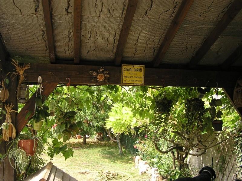 Ma nouvelle installation de hoyas dans la véranda extérieure P6030513