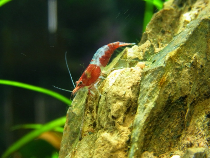 Mes zolies Red Rilli (50 l) Rimg1816
